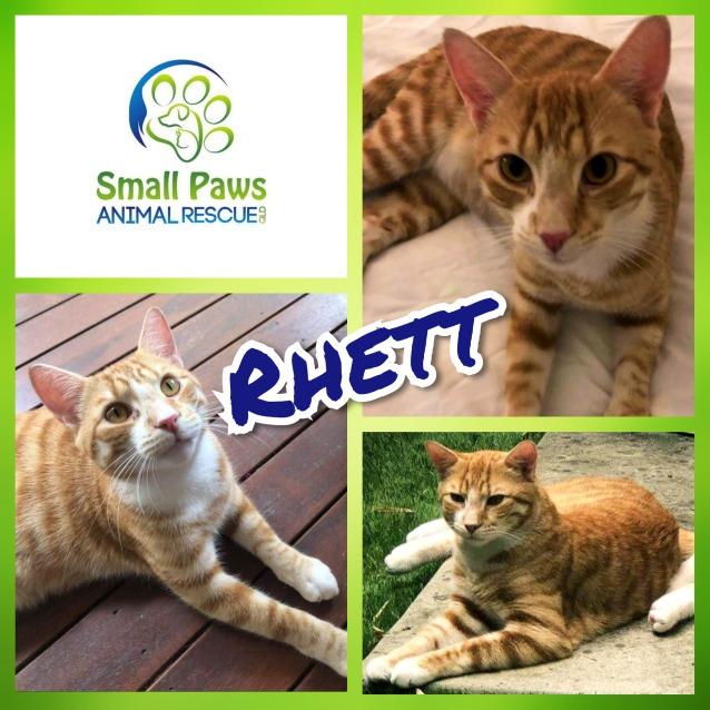 Photo of Rhett