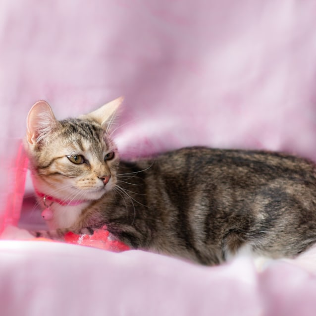 Photo of Jacquie
