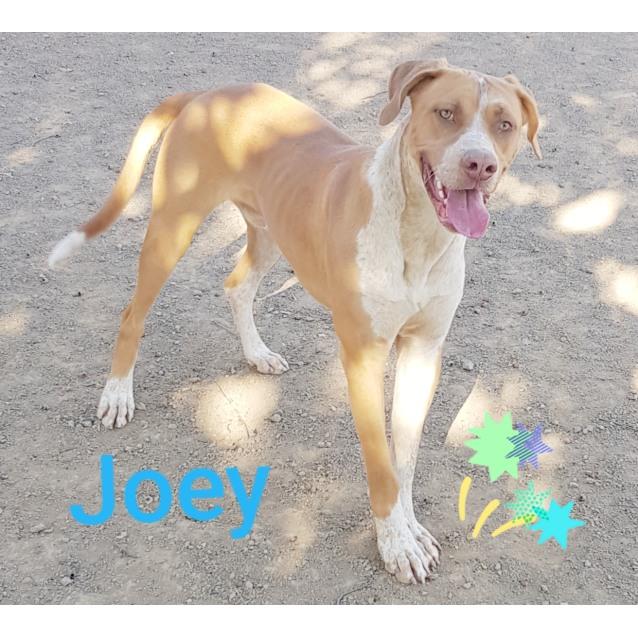 Photo of Joey (272019)