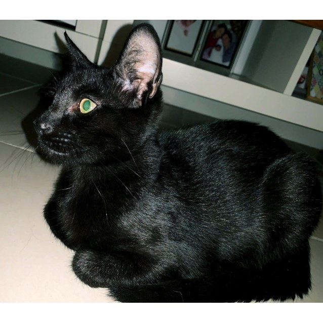 Photo of Cobalt