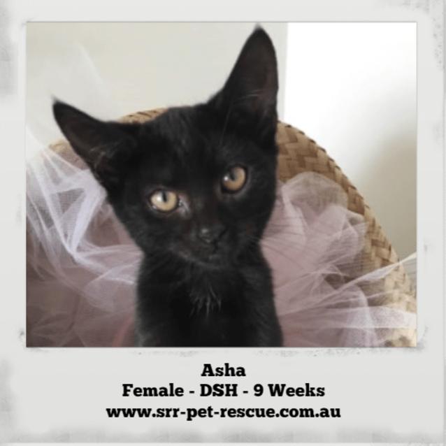 Photo of Asha