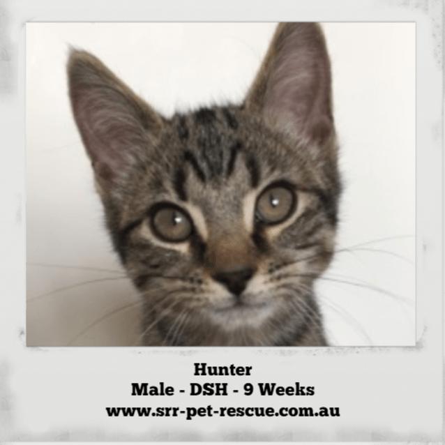 Photo of Hunter
