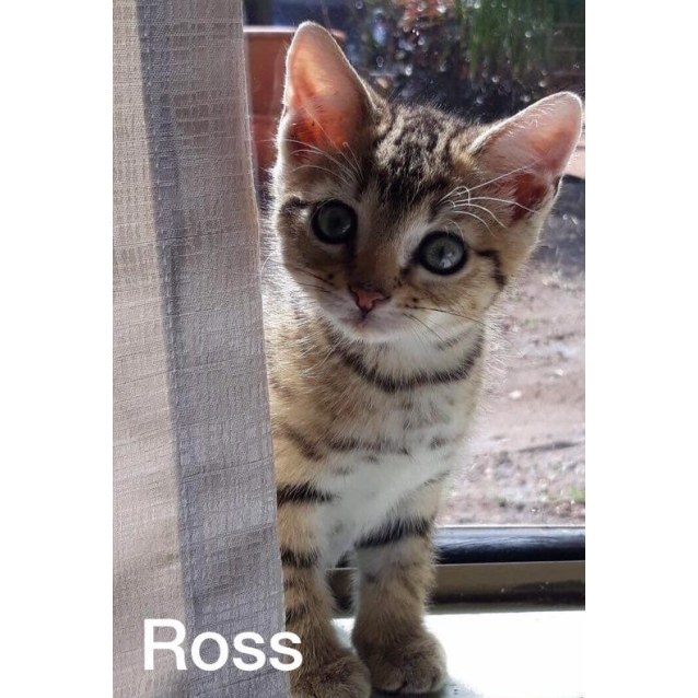 Photo of Ross