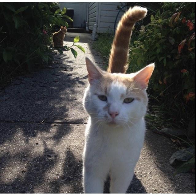 Photo of Jasper (Located In Taylors Hill)