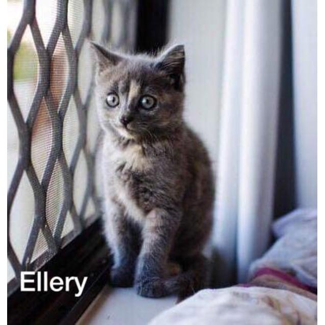 Photo of Ellery