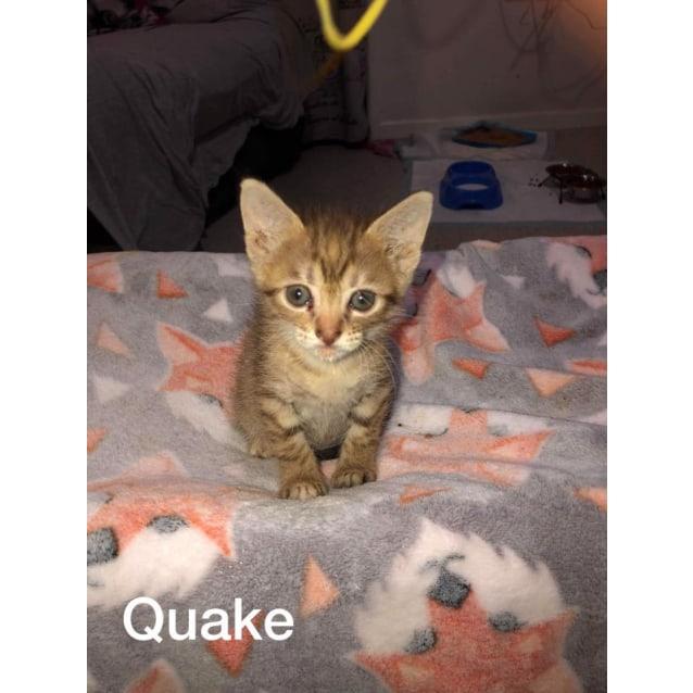 Photo of Quake