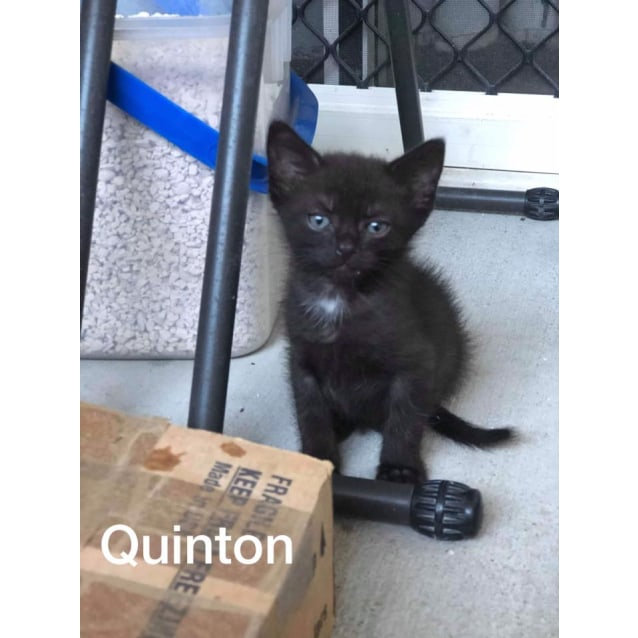 Photo of Quinton