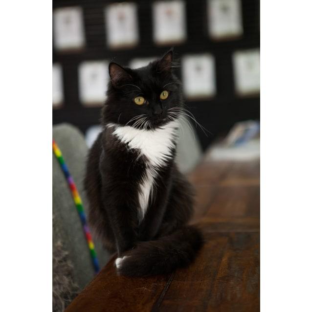 Photo of Belle   Meet Me In Cat Lounge/Neko Hq Preston
