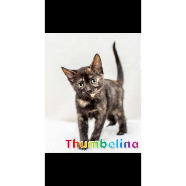 Photo of 1025   Thumbelina