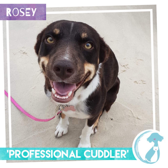 Photo of Rosey