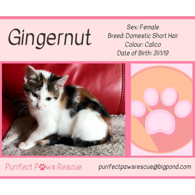 Photo of Gingernut