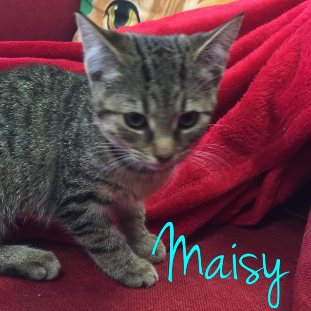 Photo of Maisy   Meet Me @Cat Lounge/Neko Hq, Preston