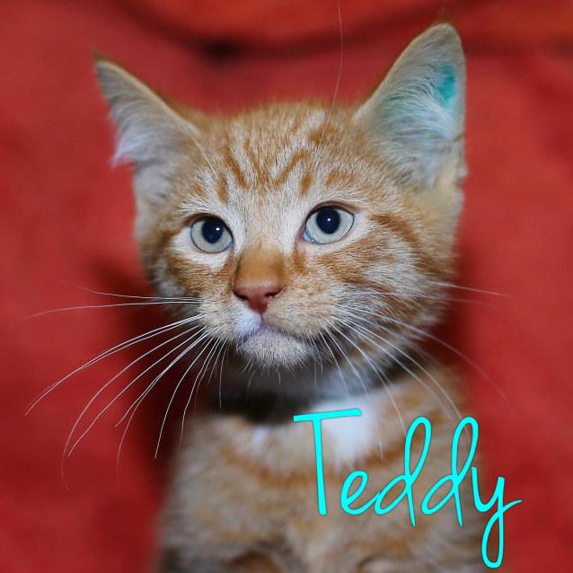 Photo of Teddy   Meet Me @ Cat Lounge/Neko Hq, Preston