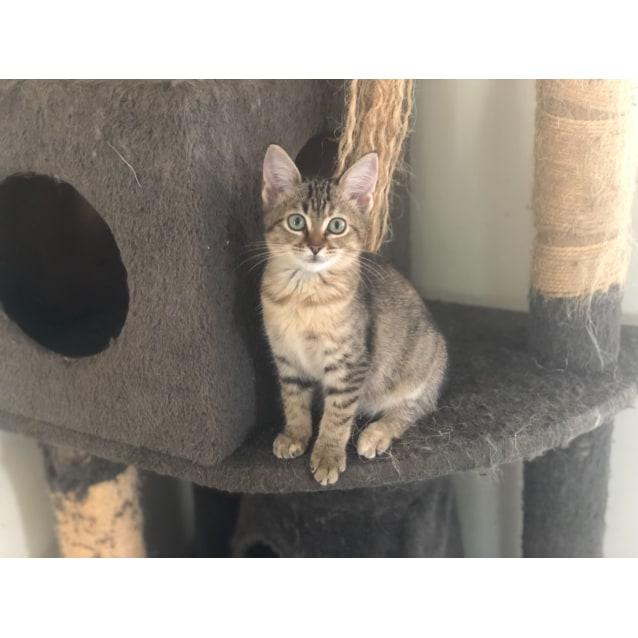 Photo of Tiramisu