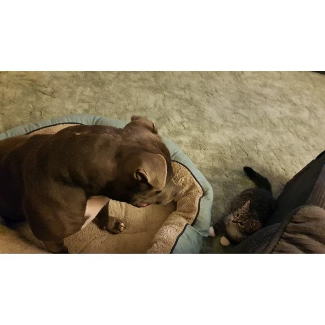 Photo of Pumba