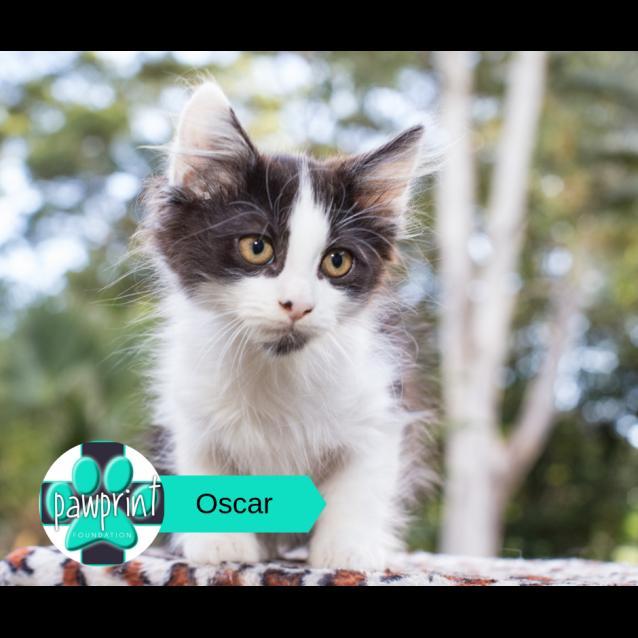 Photo of Oscar