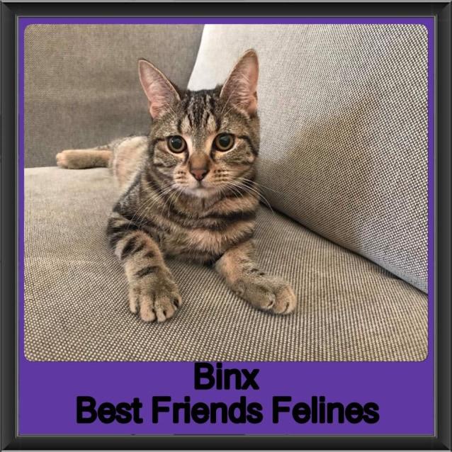 Photo of Binx