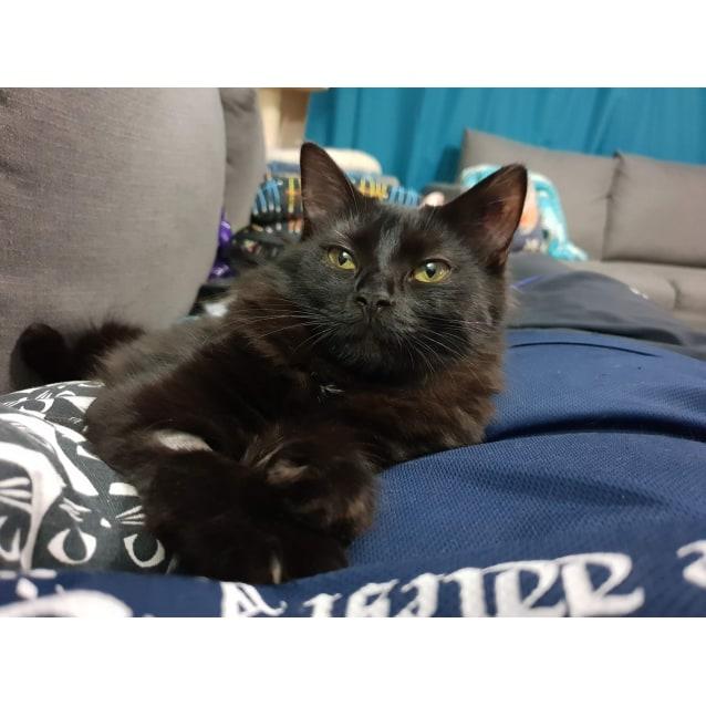 Photo of Zampi