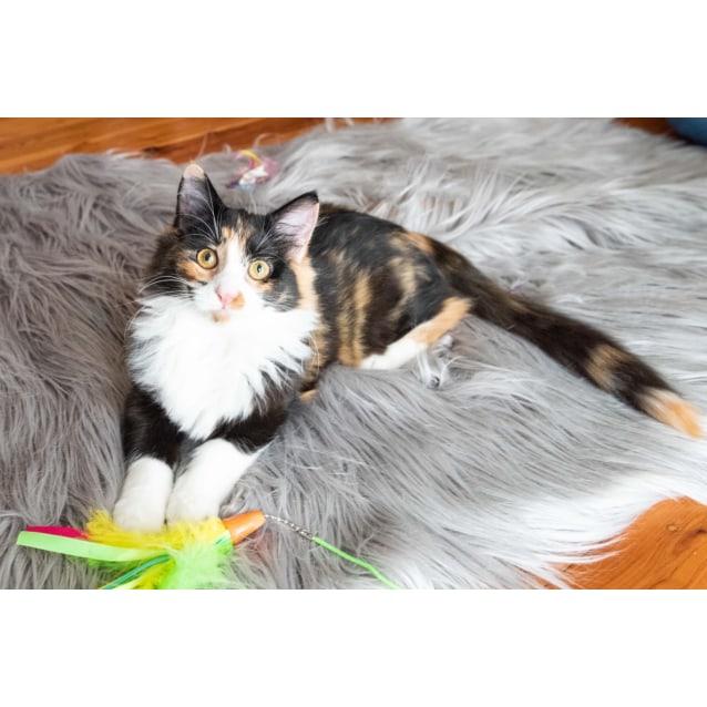 Photo of Callie 💖