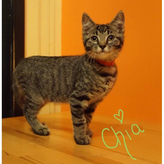 Photo of Chia