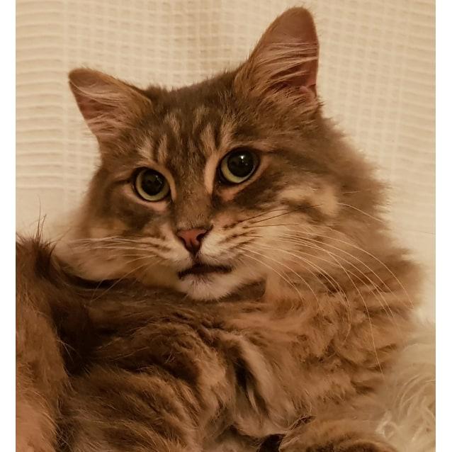 Photo of Mr Fluffy