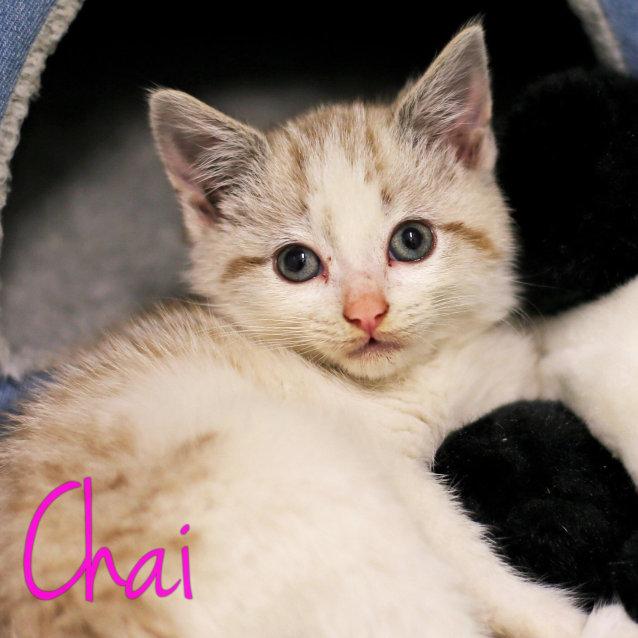 Photo of Chai   Located In St. Kilda