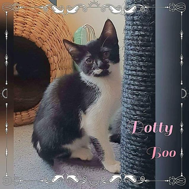 Photo of Dotty Boo