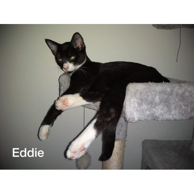 Photo of Eddie