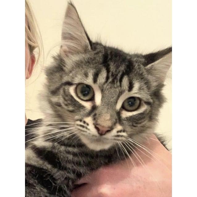 Photo of Rescue Kitten   Dusky