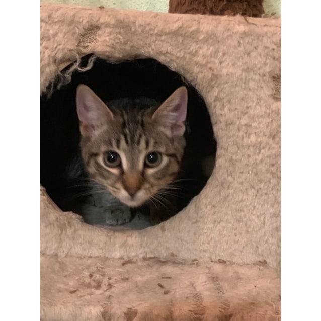 Photo of Rescue Kitten   Emmi