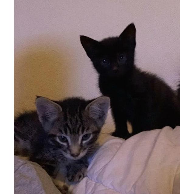 Photo of Rescue Kitten   Love