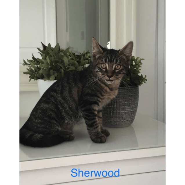Photo of Sherwood