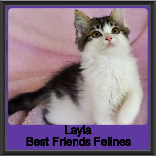 Photo of Layla