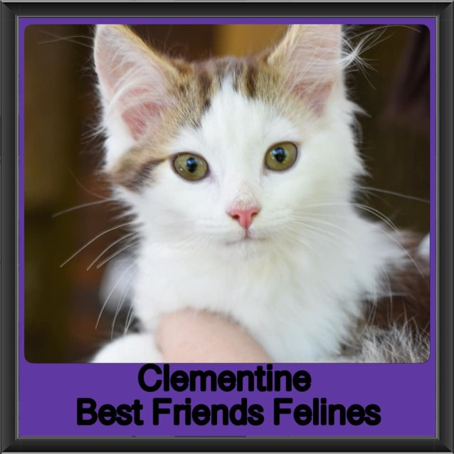 Photo of Clementine