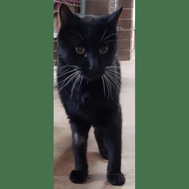 Photo of Puss Puss
