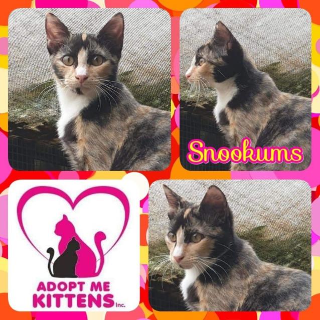 Photo of Snookums