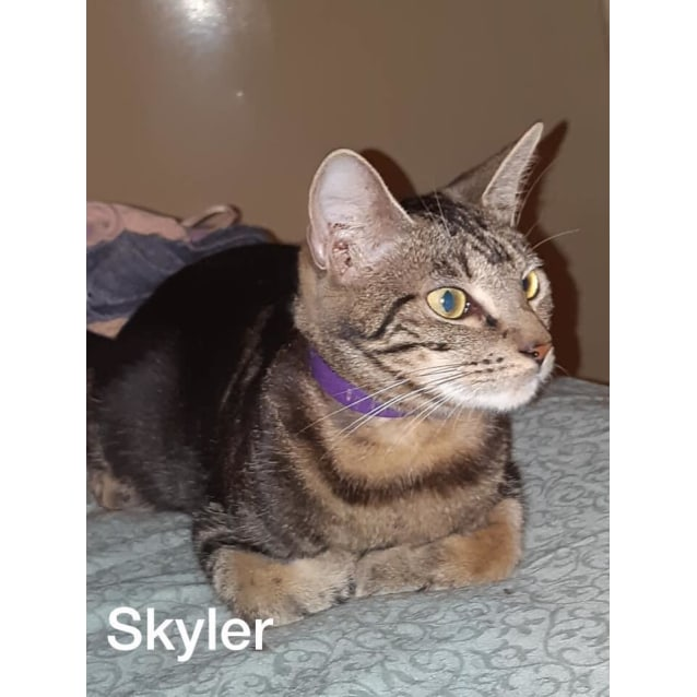 Photo of Skyler