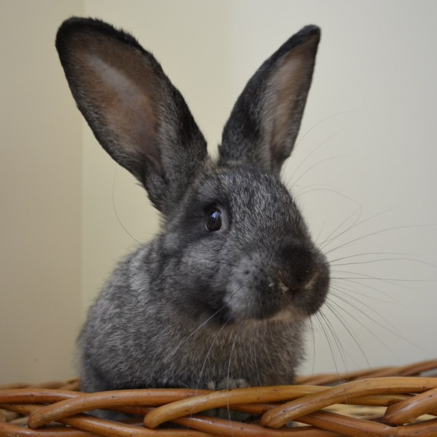 Photo of Wolfgang
