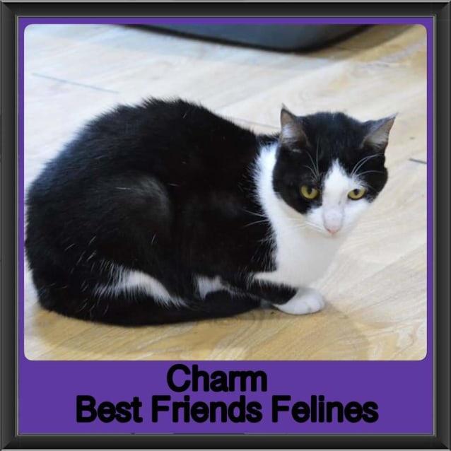 Photo of Charm