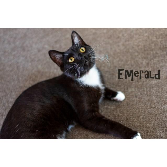 Photo of Emerald