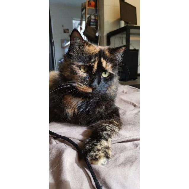 Photo of Nyla
