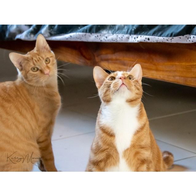 Photo of Ronald & Kurt (Gorgeous Pair)