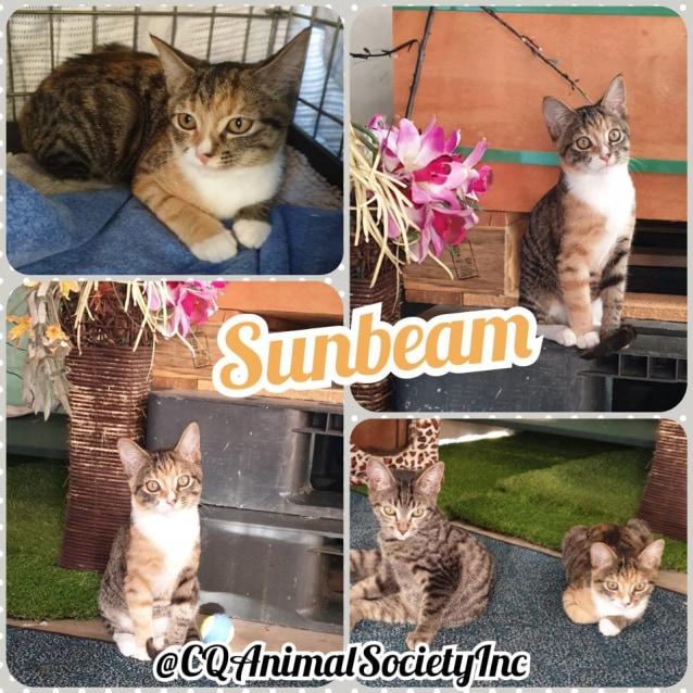 Photo of Sunbeam