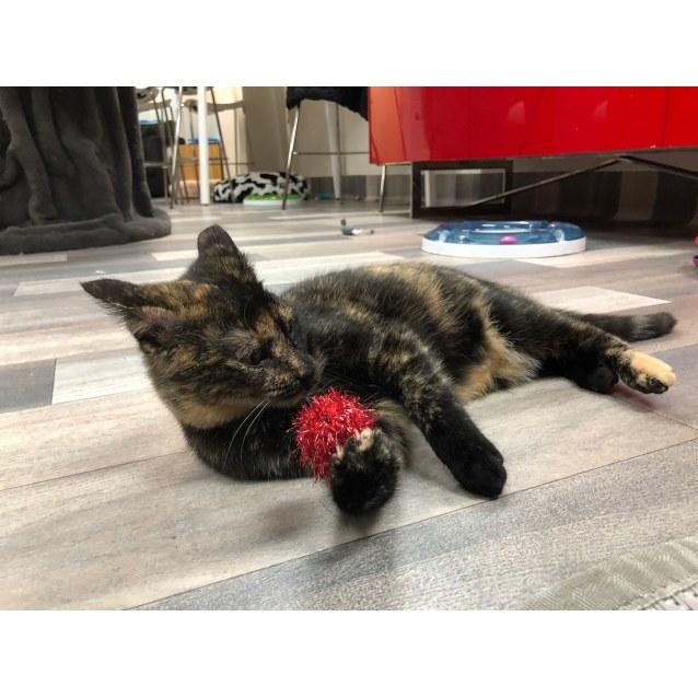 Photo of Monkey May   Meet Me In Cat Lounge/Neko Hq Preston