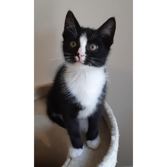 Photo of Socksie