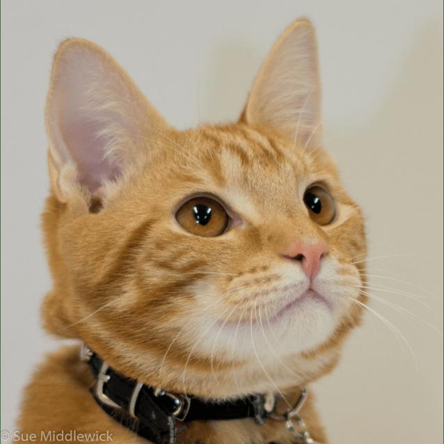 Photo of Eddie
