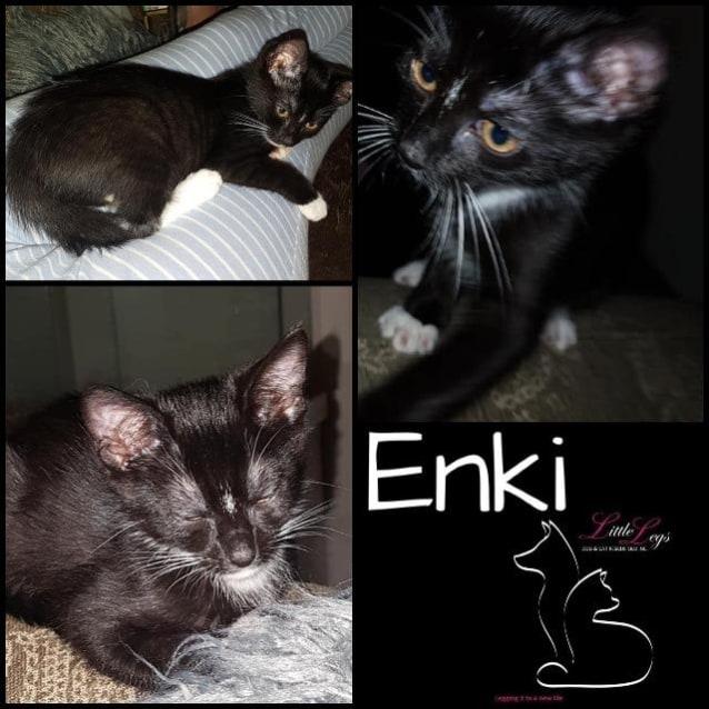 Photo of Enki
