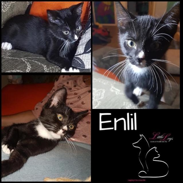 Photo of Enlil