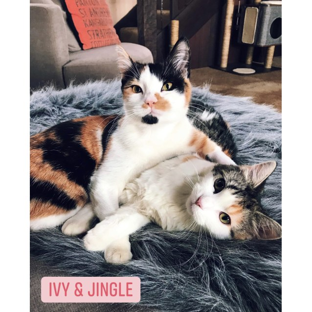 Photo of Holly, Ivy & Jingle