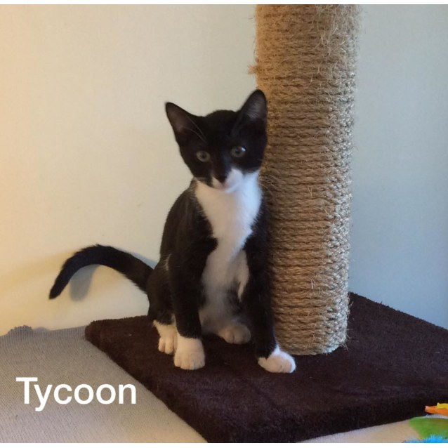 Photo of Tycoon